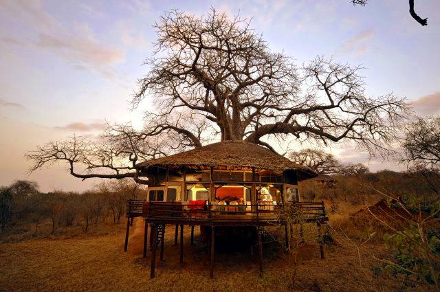 phoca_thumb_l_tree house lit inside
