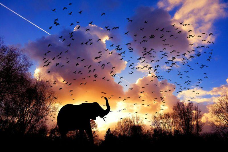 elephant-3117217_1920